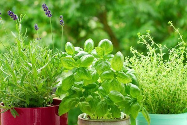 полезни билки