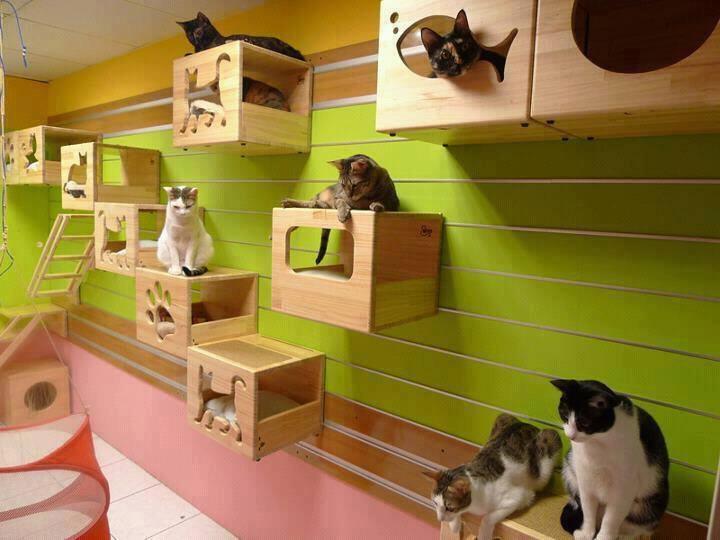 къща за котки на стената
