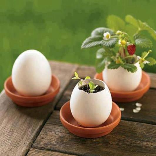 яйце с ягоди