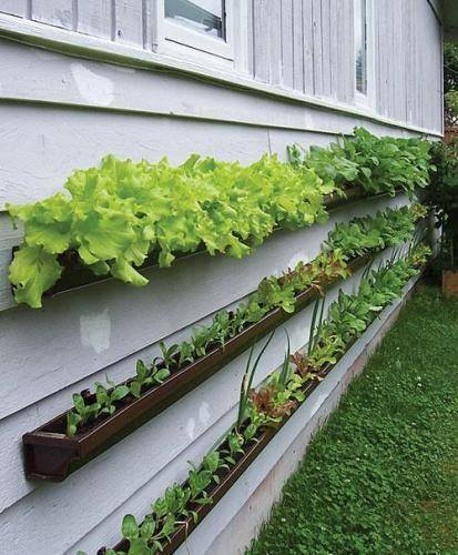 зеленчукова градина от улуци