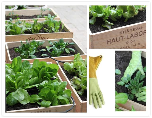 полезни идеи за градината