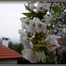 Градината през април