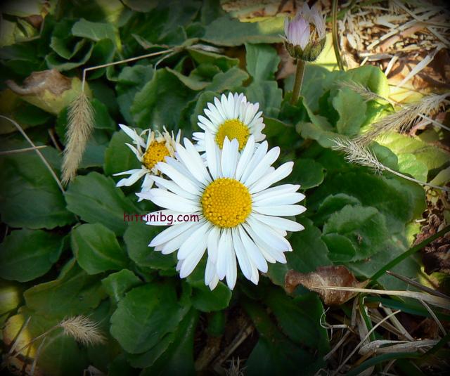 цветя в градината през март
