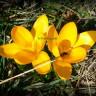 Градината през март...