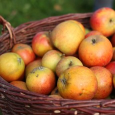 Ябълки - изключително полезни