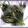 Чипс от салвия (градински чай)