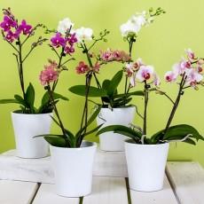 Стайни цветя и растения