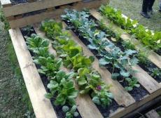 Идеи за двора и градината