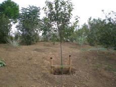 Фиданки - как да ги засадим