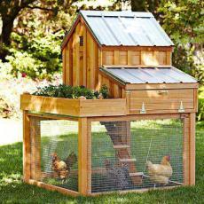 Дървен дом за домашни птици