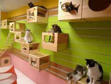 Къща за котки от дървени сандъци