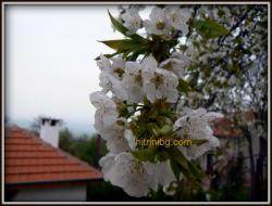 градината през април...